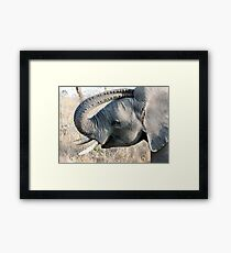 Young Elephant Framed Print