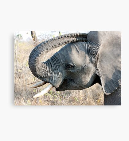 Young Elephant Canvas Print