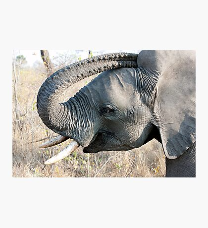 Young Elephant Photographic Print