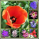 Tulips and Hyacinths Collage von BlueMoonRose