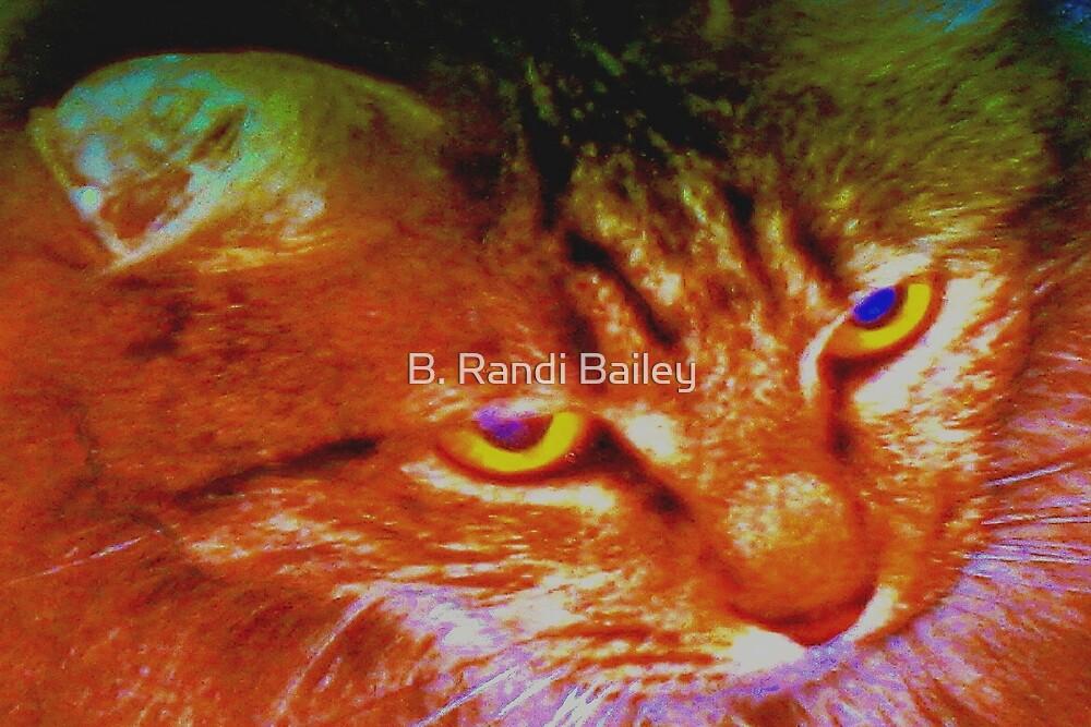 Persian tabby cat by ♥⊱ B. Randi Bailey