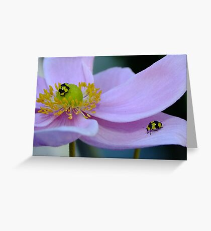 Beauty in Flowers! Greeting Card