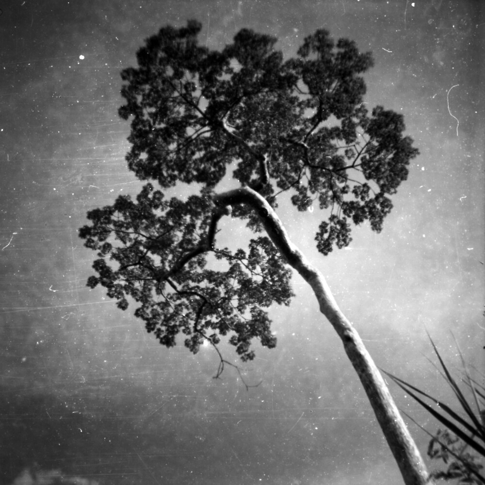 perspective, anlong veng, cambodia by tiro