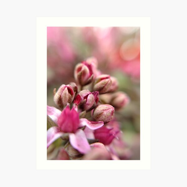 Cluster Buds Art Print