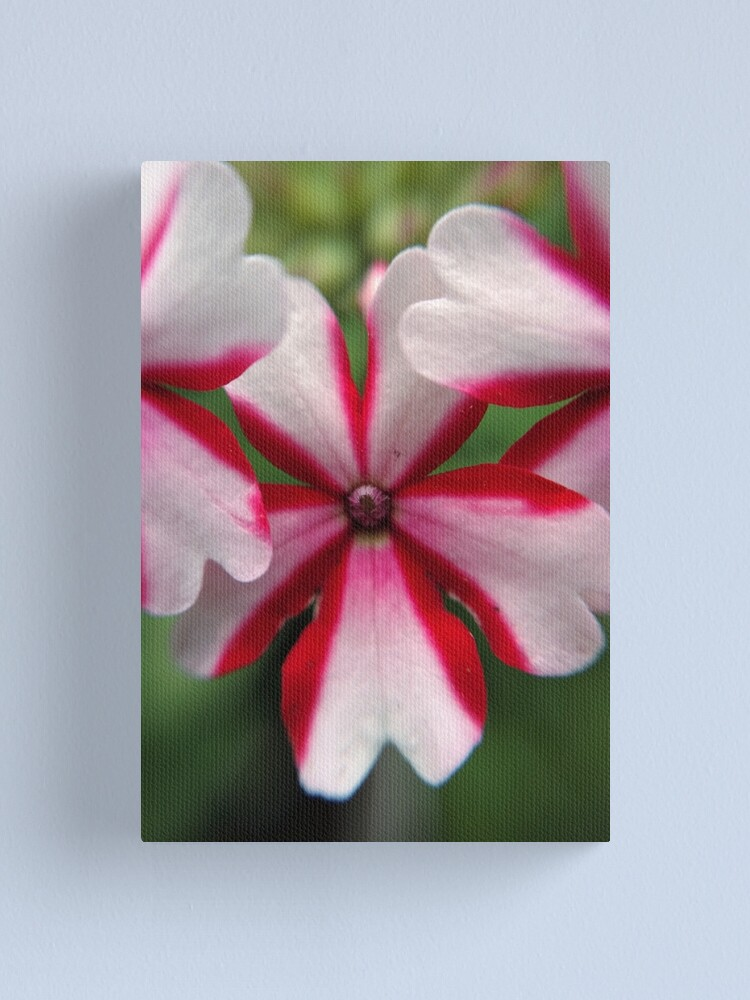Alternate view of Pink Stripes Canvas Print