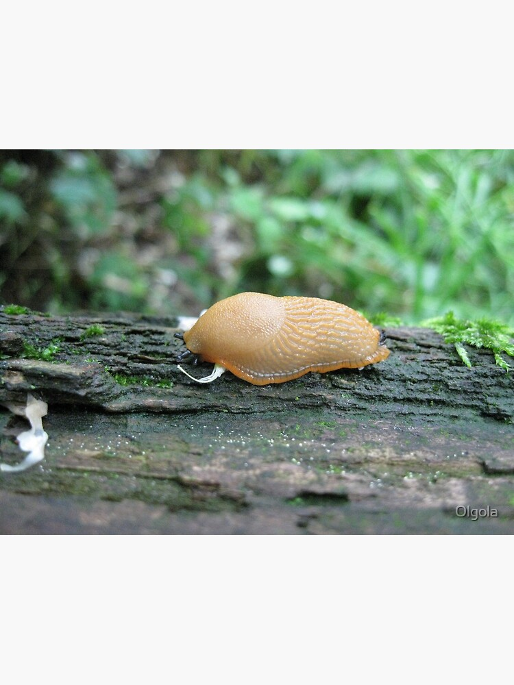 Tiny Snail by Olgola