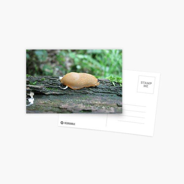 Tiny Snail Postcard