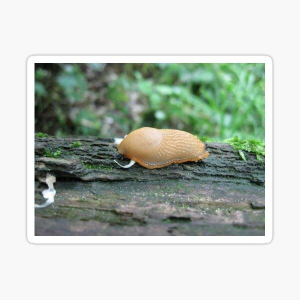 Tiny Snail Sticker