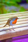 Vibrant Robin by Andy Beattie