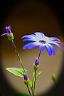 A little blue by Andy Beattie