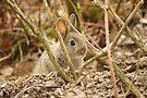Rabbit kitten by Andy Beattie