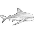 Great White Shark I by MadliArt