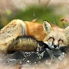 Wooded Fox by Delights