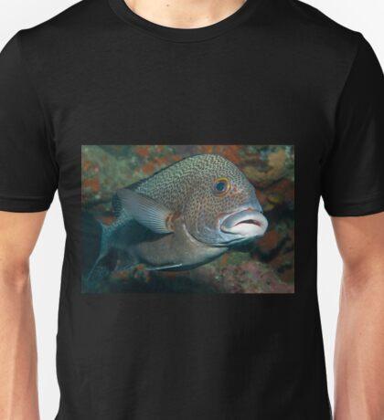 Dotted Sweetlips, Lord Howe Island, Australia T-Shirt