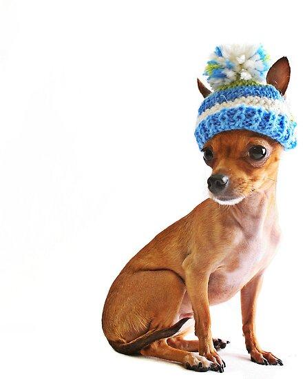 Chihuahua by Susanne Correa