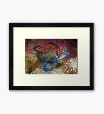 One of the most beautyful coloured fish  Framed Print