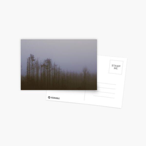 Fog and Needle Postcard