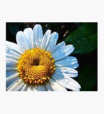 Wet Daisy Photographic Print