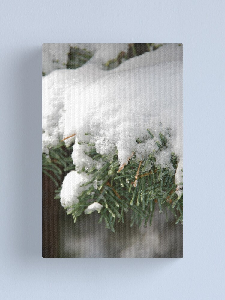 Alternate view of Snow-Flocked Boughs of a White Fir Canvas Print