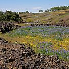 Table Mountain Wildflowers by Patty Boyte