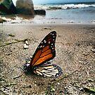 Monarch by BonnieToll