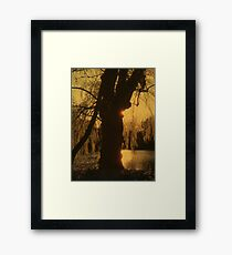 Sunset Behind the Tree Framed Print