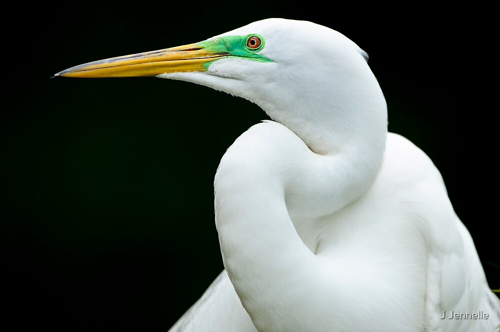 Essence of Egret by J Jennelle