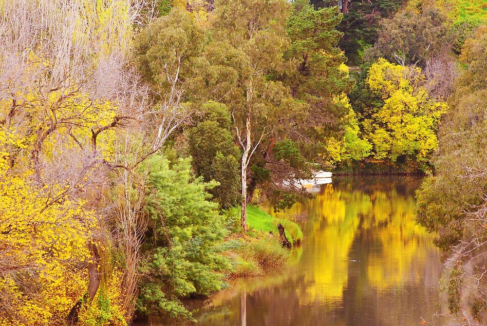 Yarra River In Autumn by reuphiri