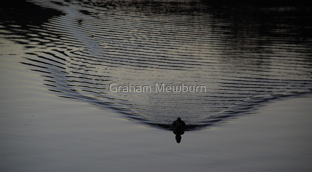 Duck Vibrations by Graham Mewburn