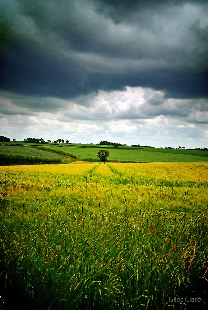 Storm over barley, The Cotswolds, England by Giles Clare