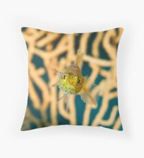 Mediterranean Blenny Macro Throw Pillow