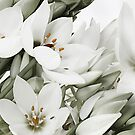 White Lillies by gary A. trounson