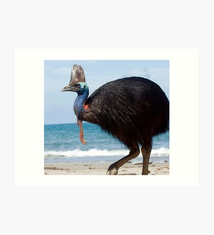 Beach Comber - cassowary at Etty Bay Art Print
