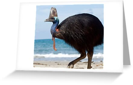 Beach Comber - cassowary at Etty Bay by Jenny Dean