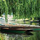 Cambridge Punts by Robert Ellis