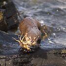 My Crab by Gary Buchan