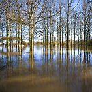 New Lagoon by Paul Whittingham