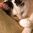 Almost Asleep! by Heather Friedman