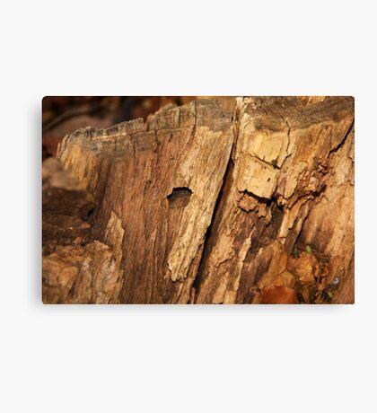 Textured tree stump macro Canvas Print