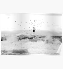 freezing gulls Poster