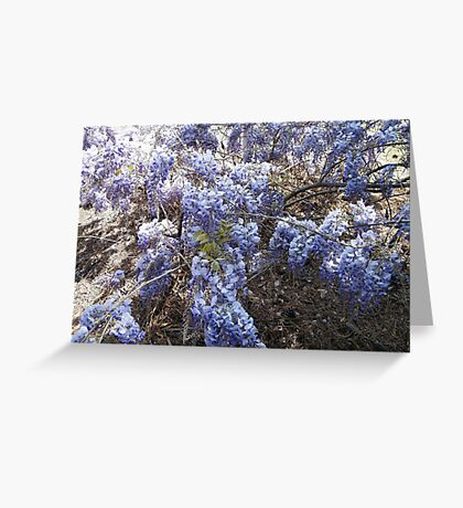 Wisteria Bush Greeting Card