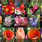 Glories of Spring Floral Collage in Mirrored Frame von BlueMoonRose