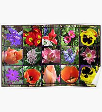 Glories of Spring Floral Collage in Mirrored Frame Poster