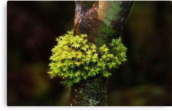 Moss Series #1- Nolte State Park by Terrie Taylor