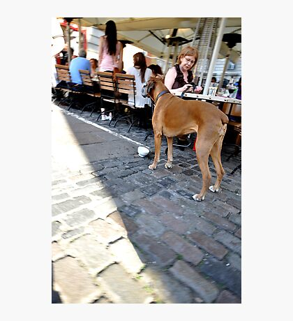 Dinner with the dog  Photographic Print