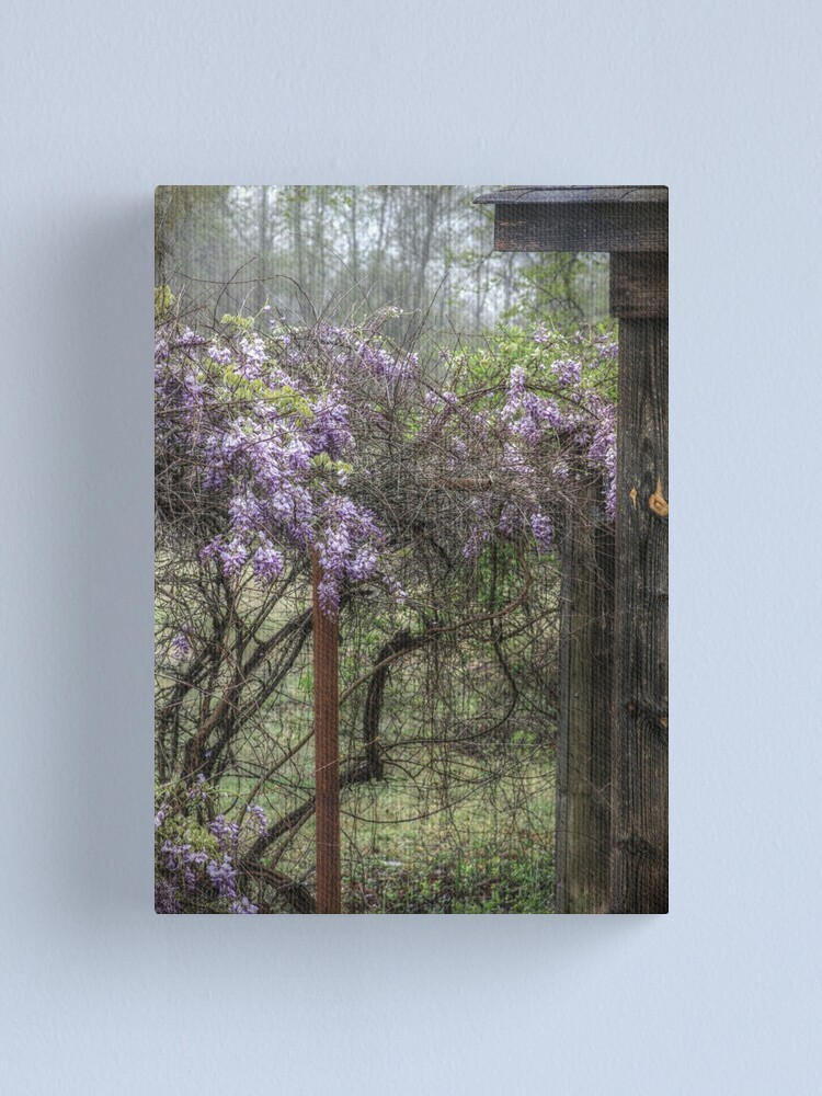 Alternate view of Morning Mist and Wisteria Canvas Print