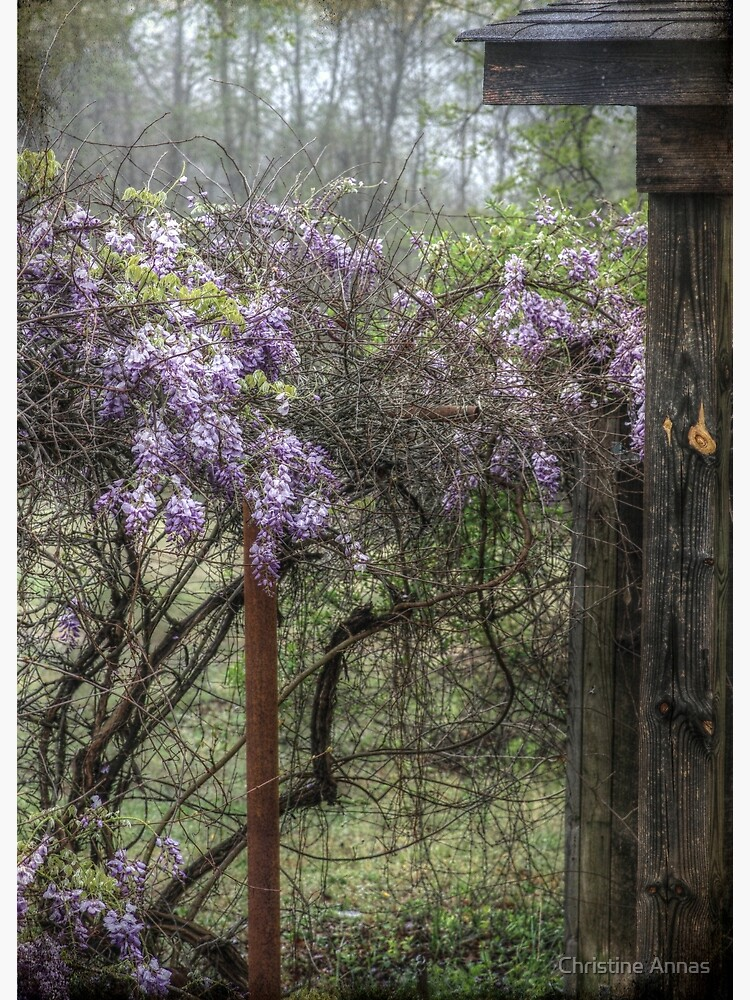 Morning Mist and Wisteria by 2Bricks