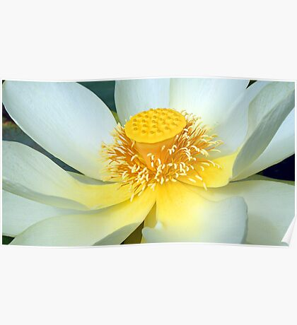 Monster  Water Lilly Poster