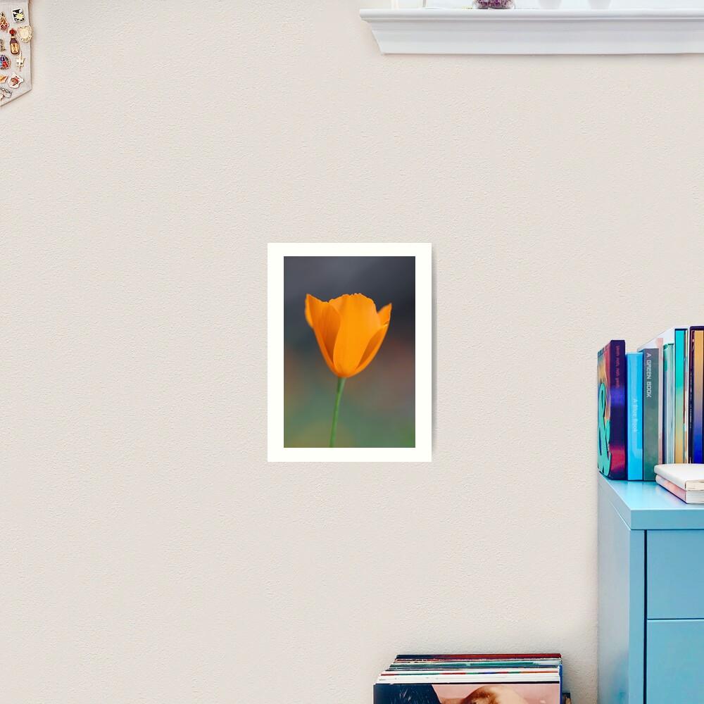 Tufted Poppy Art Print