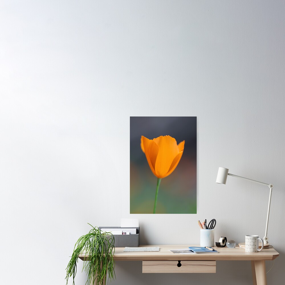 Tufted Poppy Poster